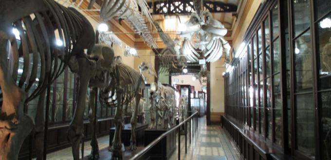 museo de ciencias de la plata