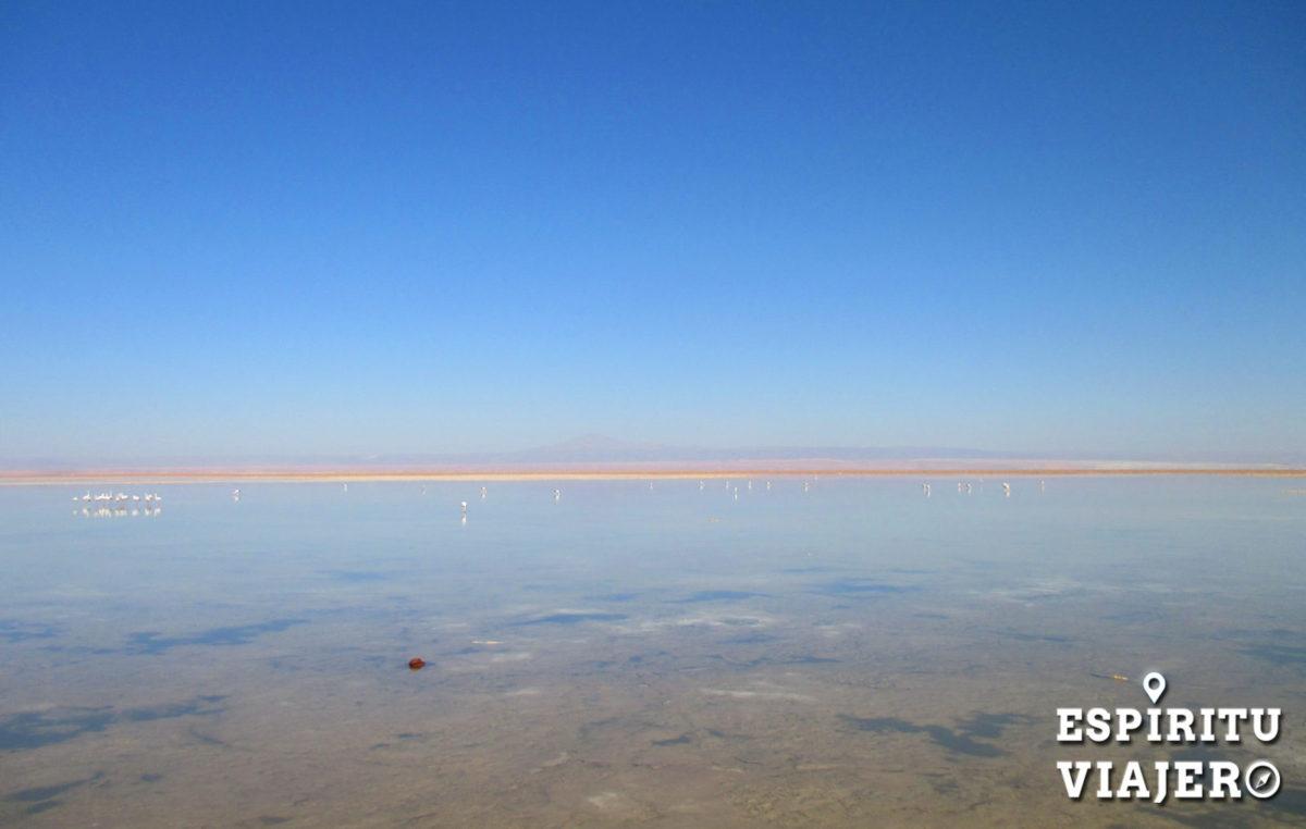 Laguna Chaxa salar de atacama