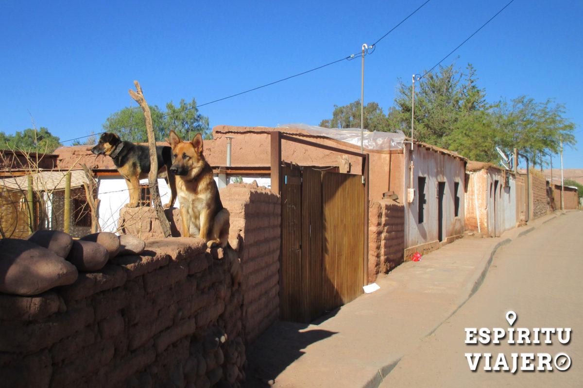 Perros San Pedro de Atacama